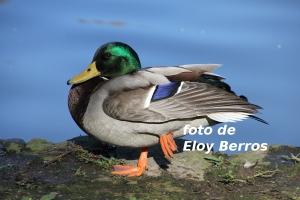 fotos pato-1