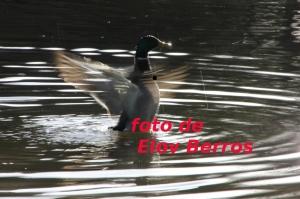 fotos pato-2