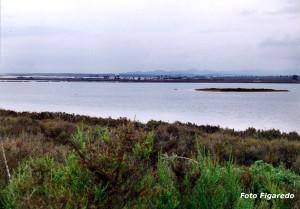 flamencos descansando en laguna Foto Figaredo Gijón