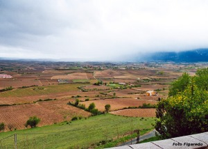 paisaje de viñedos en Laguardia. Foto Figaredo, Gijón