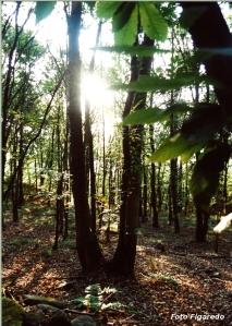 bosque de Santa Eufemia en Asturias. Foto Figaredo, Gijón