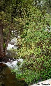 Garganta del río. Foto Figaredo, Gijón