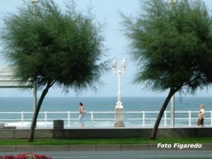 Plataneras en paseo marítimo de Gijón. Foto Figaredo, Gijón